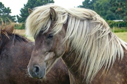 horse12
