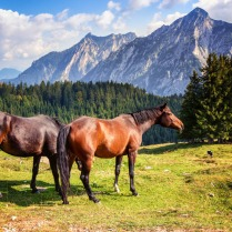 horse15