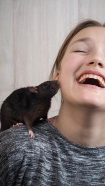 rat35